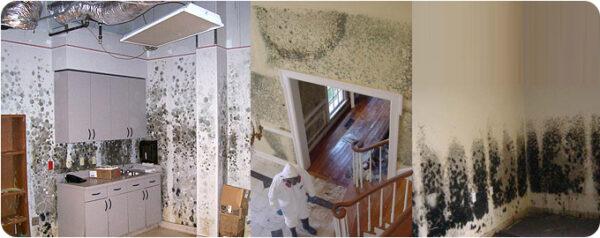 Mold Cleanup Nashua NH