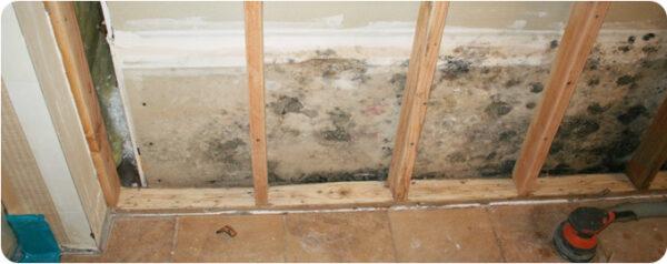 Mold Remediation Nashua NH